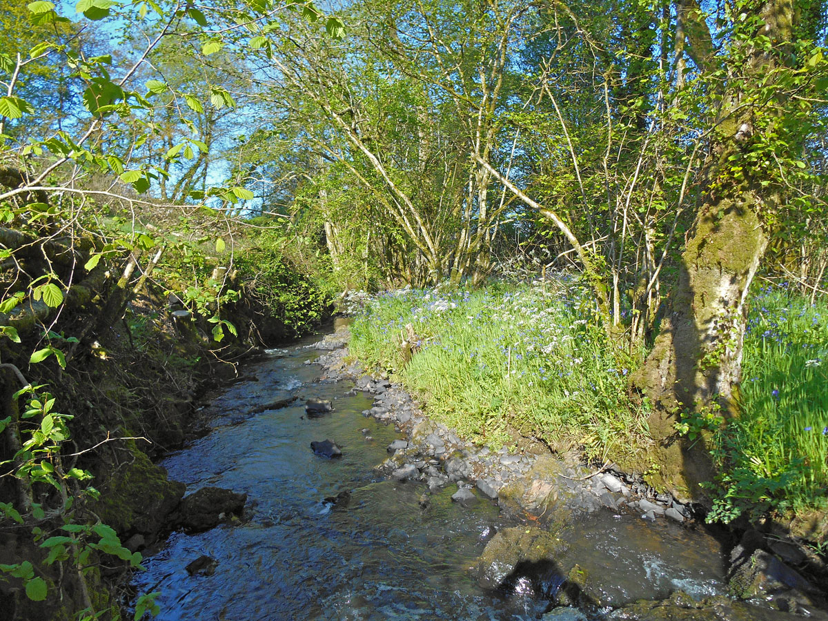 River at south coombe self catering devon