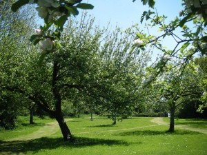 South Coombe Orchard 2